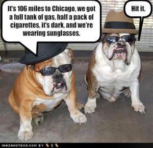 Bluesbrosdogs (Large)