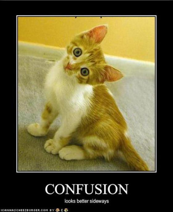 Image result for lolcat confused