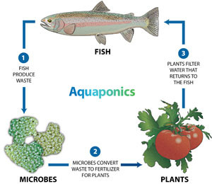 Garden Pool Closed Loop Aquaponics Hydroculture