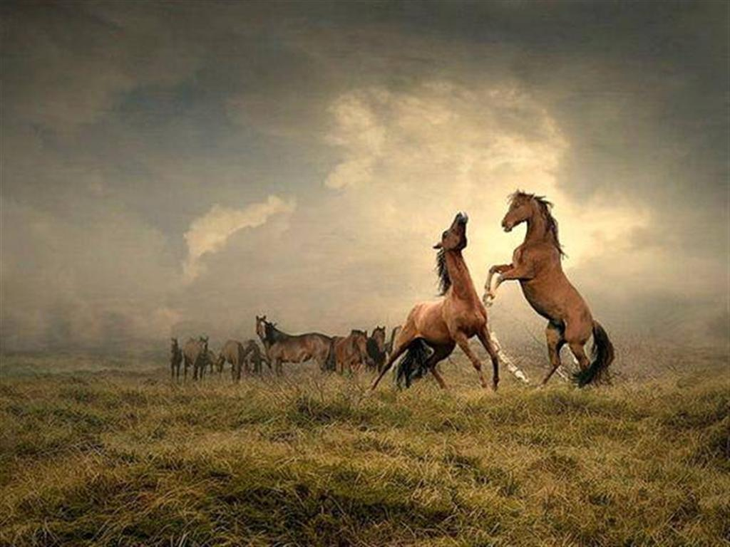 Must see Wallpaper Horse Epic - horses_fighting-large  Collection_423487.jpg