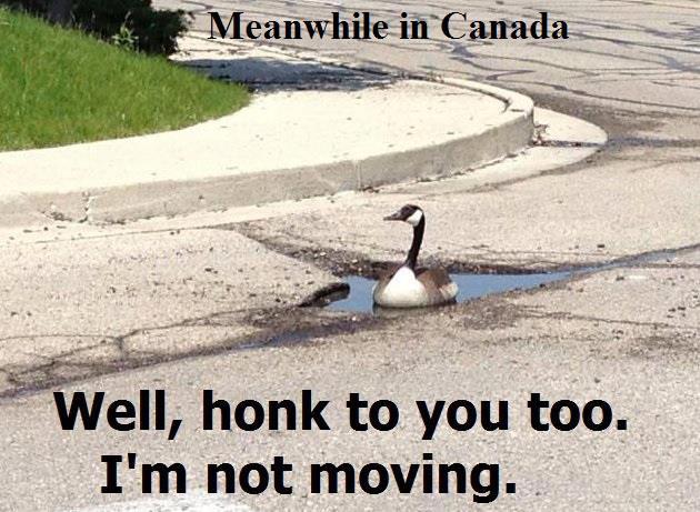 honk to you too