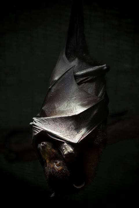 bat wrapped