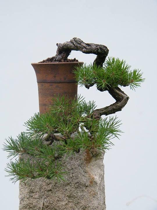 cascading pine-lubos masar