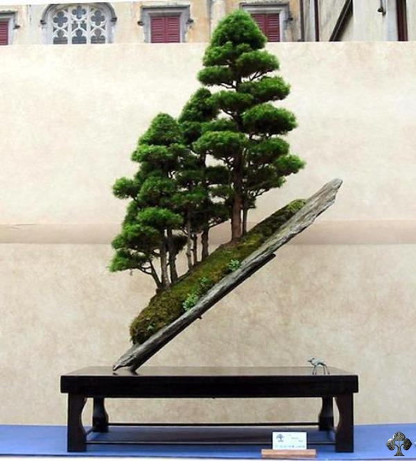 slanting juniper-chinensis bonsai