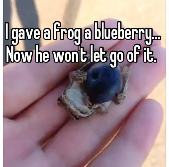frog w-blueberry