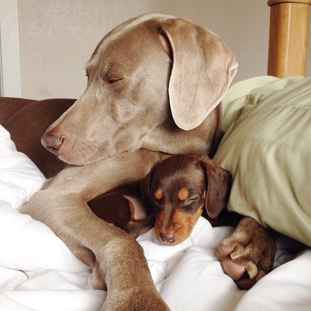 Harlow-and-Indi-Bed