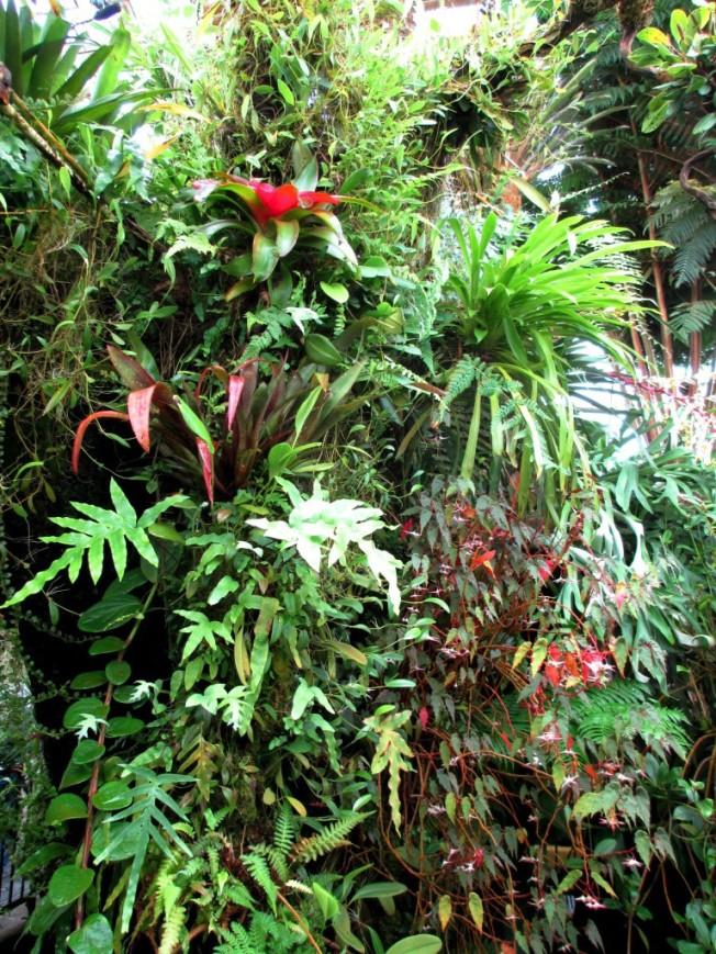 A wall of bromeliads.