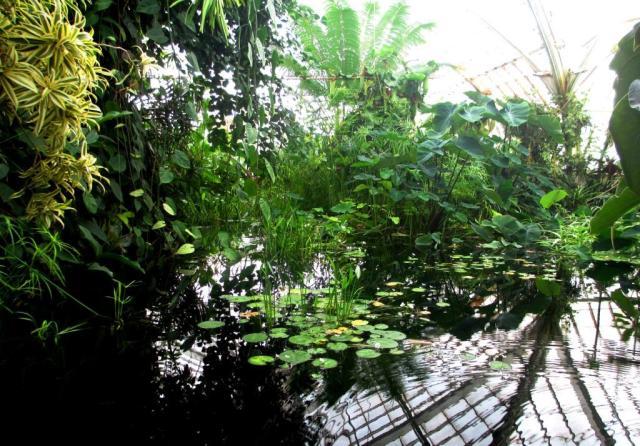 GGP-CoF-lily pond