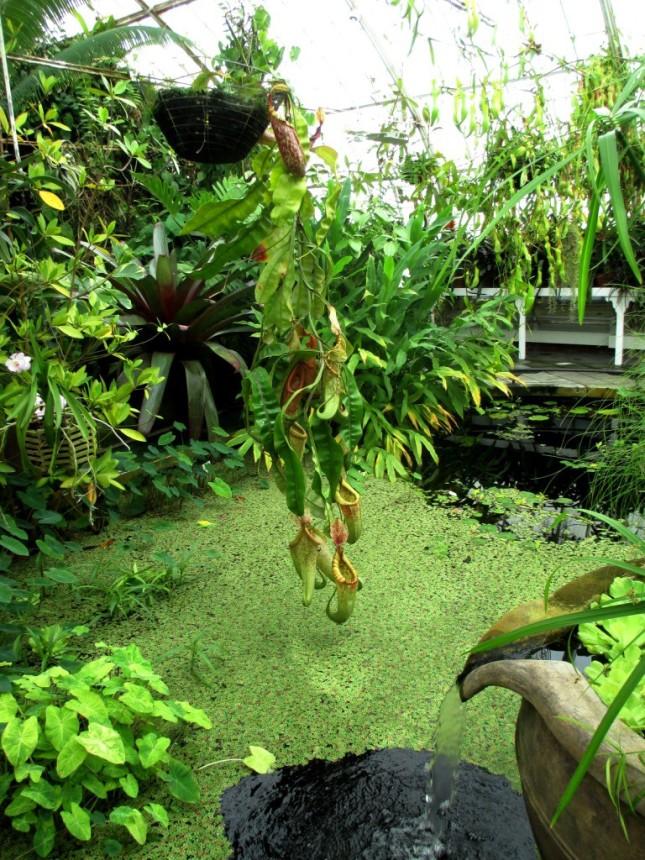 GGP-CoF-lily pond1