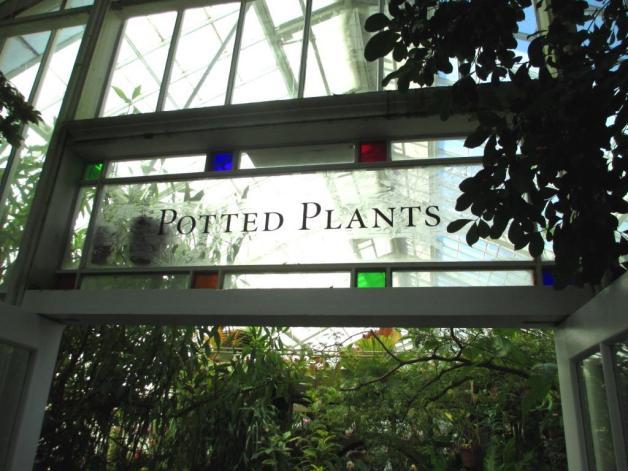 GGP-CoF-potted plants