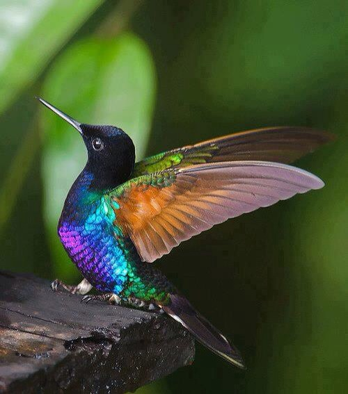 hummer wings