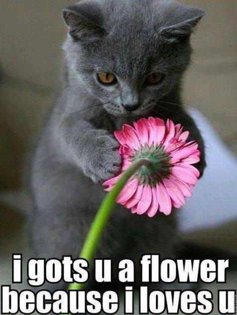 i gots u a flower