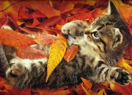 kitten in fall foliage