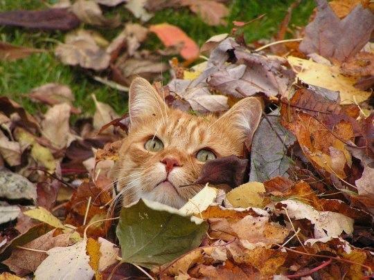 leafy kitty
