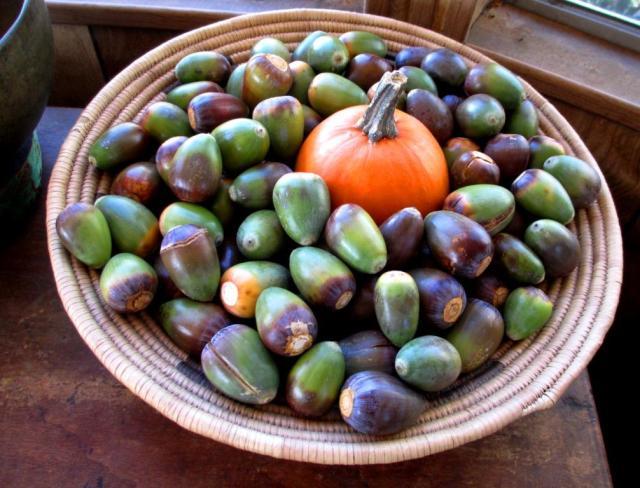 green egg acorns