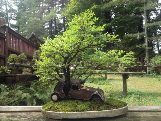save for halloween-old car bonsai