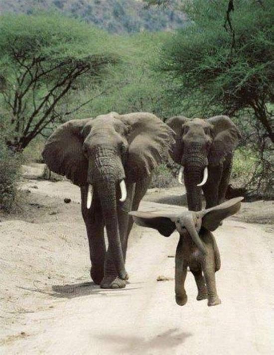 baby elephant happy dance-dumbo lookalike