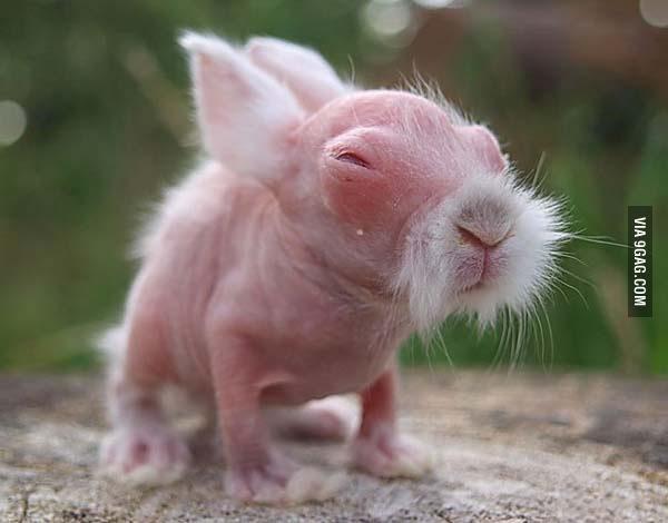 baby wombat looks like kung fu master