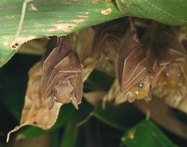 bats under foliage