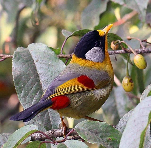 bird-argentina