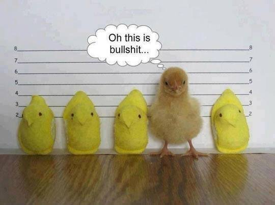 easter-usual suspect chicks