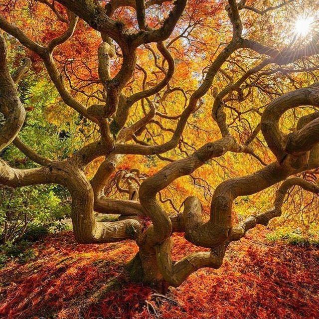 tree-fall colors_Protik Hussain