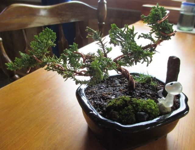 bonsai-after-rear