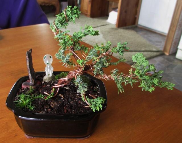 bonsai-after