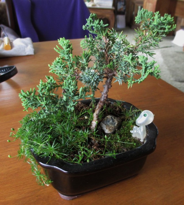 The only moss that took hold was (interestingly) the patch surrounding the Japanese kodama tree spirit.
