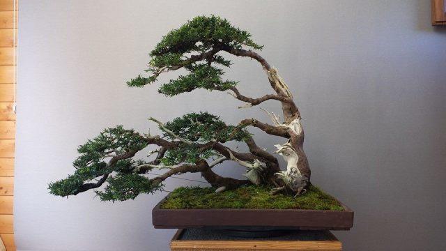 bonsai grouping_Andres Alvarez Iglesias