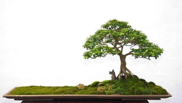 bonsai landscape-AusBonsai