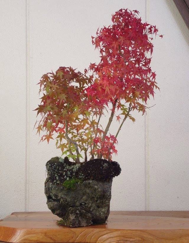 bonsai on rock2