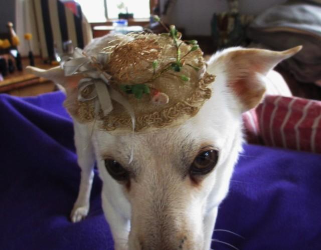 cisco w-straw hat1
