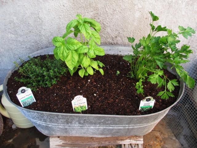 container garden-herbs