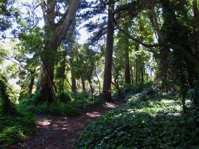 GG garden pathway
