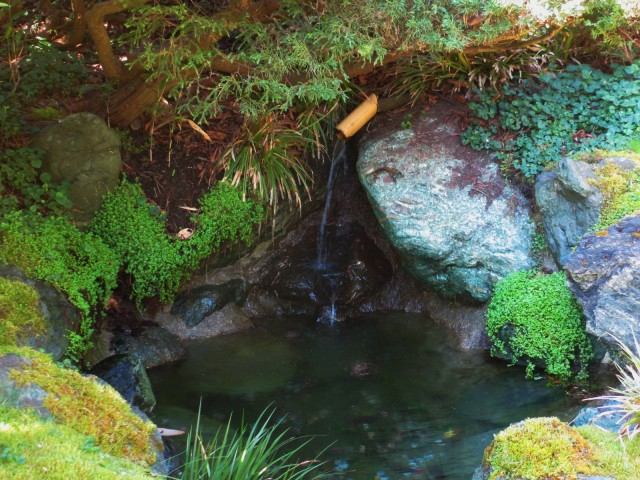 japanese garden-bamboo waterfall