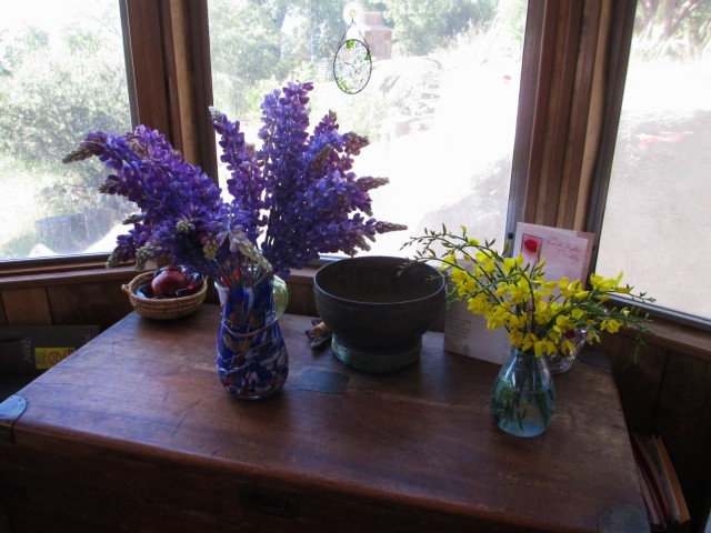 lupines and broom