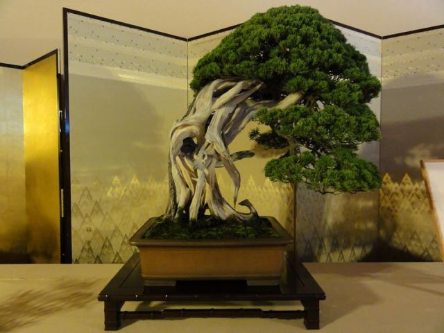 bonsai-Nikko-Japan