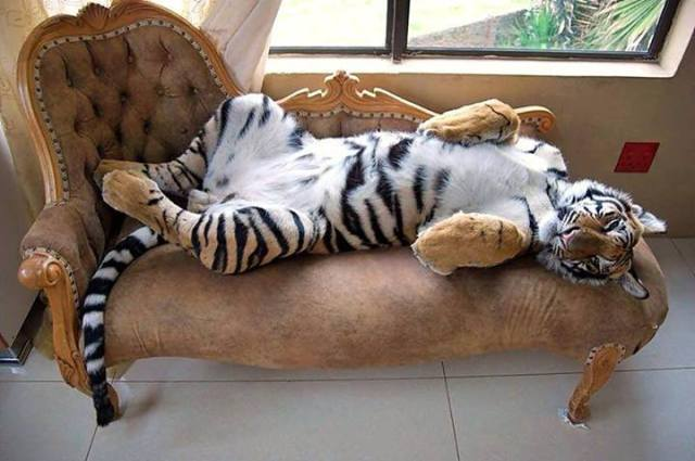 tiger on fainting couch