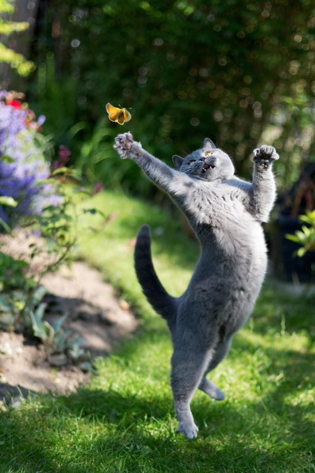 cat-catching-butterfly_kemal-selimovic
