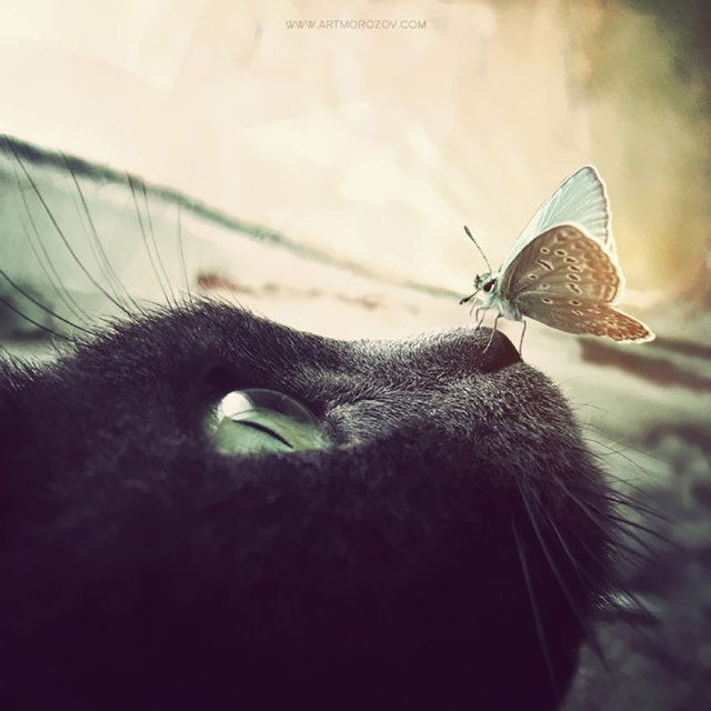 cat-w-butterfly_anatoly-morozov