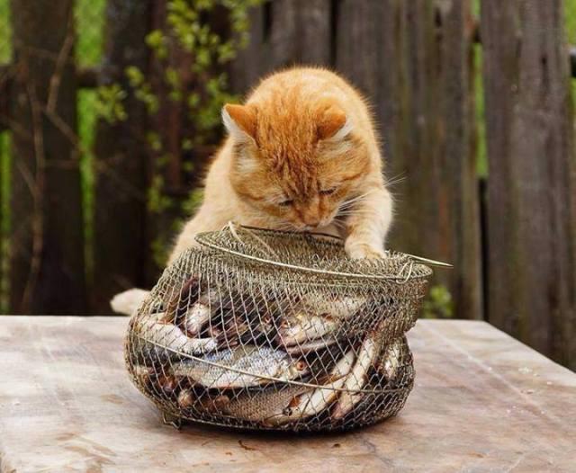 cat-w-fish-basket