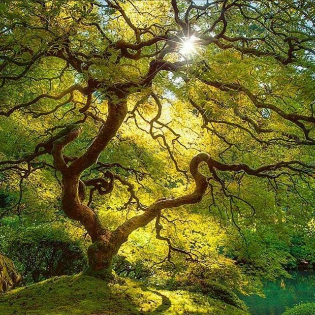 sunlit-tree_lijah-hanley-photography