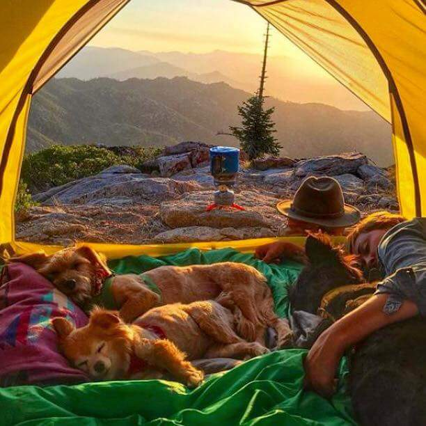 sunset-nap-w-dogs-sequoia-np