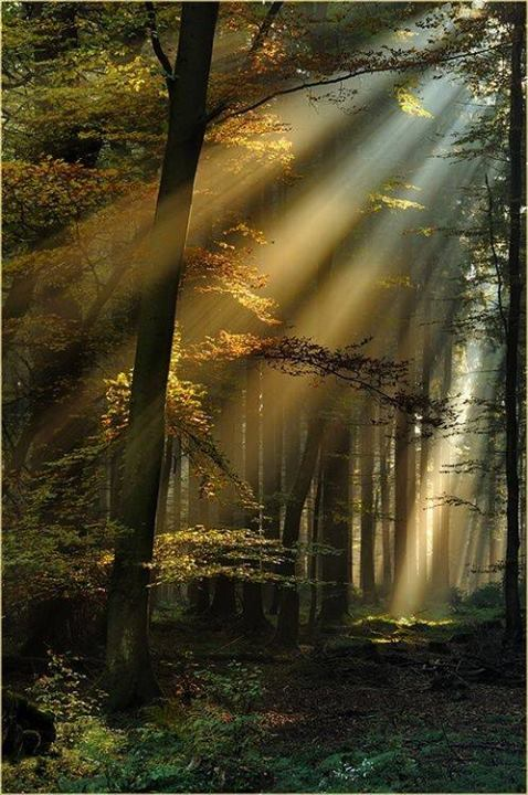 sun-beams-black-forest-germany