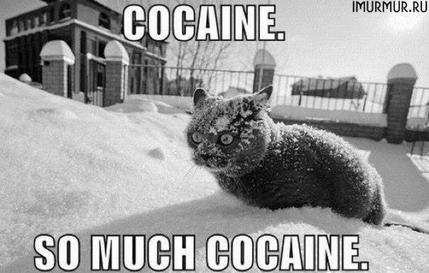cocaine-cat