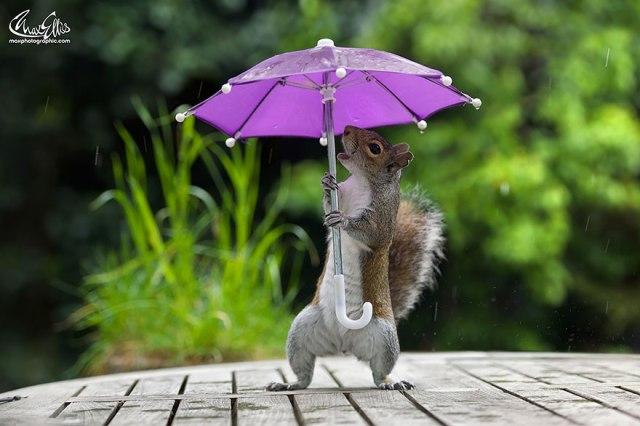 squirrel-umbrella-rain_max-ellis