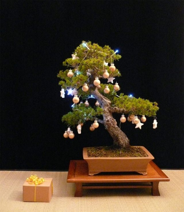 christmas-decorated-bonsai-tree
