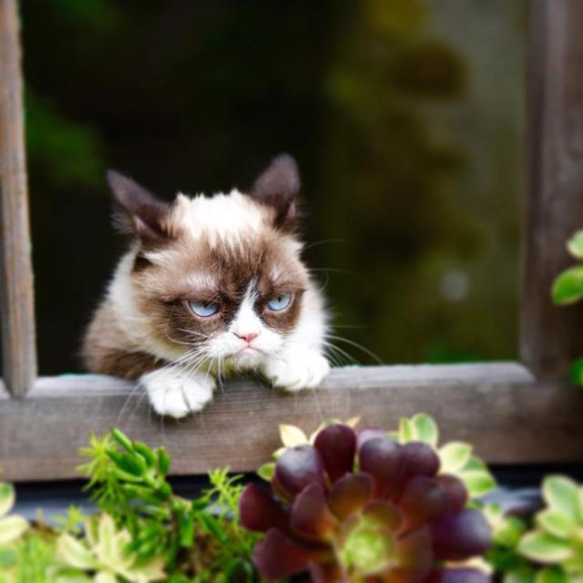 damn-summer_grumpy-cat
