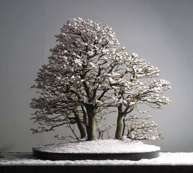 snowy-landscape-bonsai_jurg-staheli